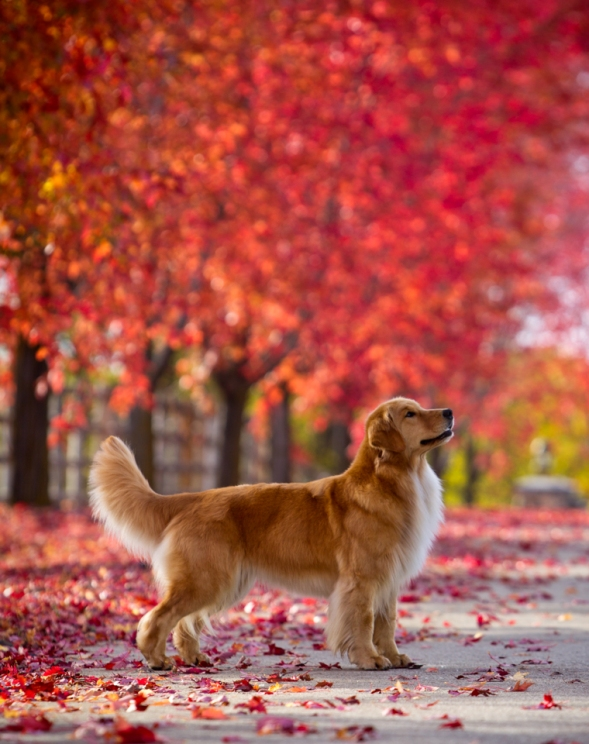 Fall_Goldens_0028