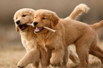 puppygirls1