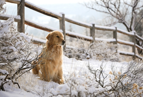 snowdogs_122113_0366